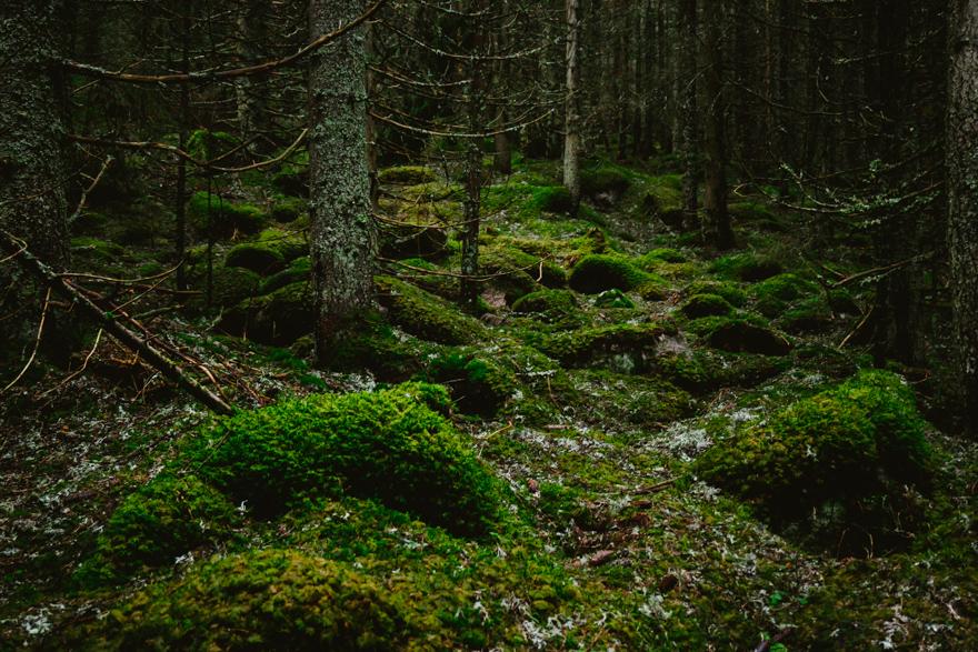 Pădurea respiră