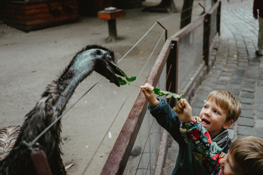 Copii hrănesc nandu la Fovarosi Allat es Novenykert în Budapesta