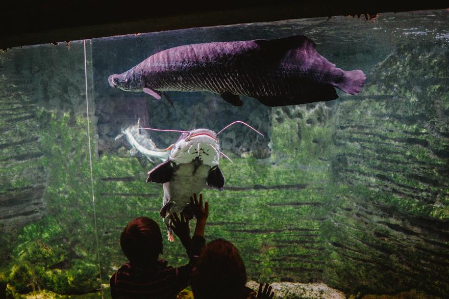 Copiii pun mâna pe sticla acvariului cu pești mari la Zoo Budapesta Fovarosi Allat es Novenykert în Budapesta