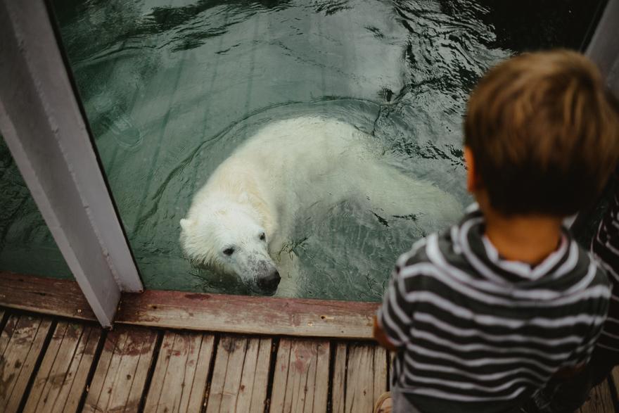 Urs polar în apa la Zoo Budapesta Fovarosi Allat es Novenykert în Budapesta