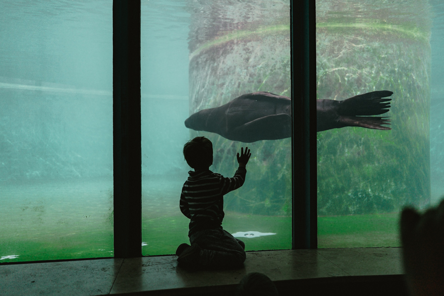 Copil priveste foca cum înoata la Zoo Budapesta Fovarosi Allat es Novenykert în Budapesta
