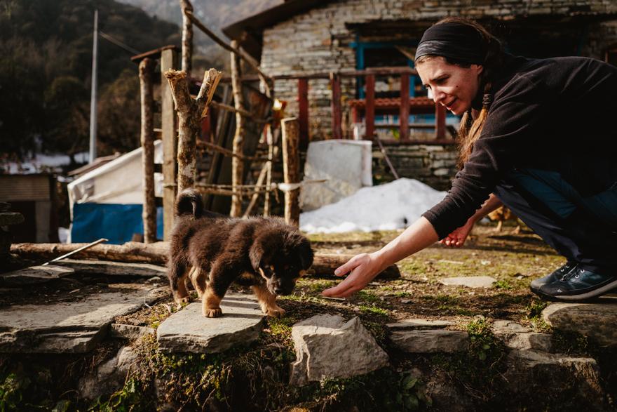 Puppy on trekking in Nepal