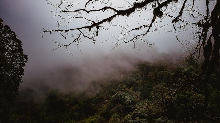 Jungla cu ceata in Nepal