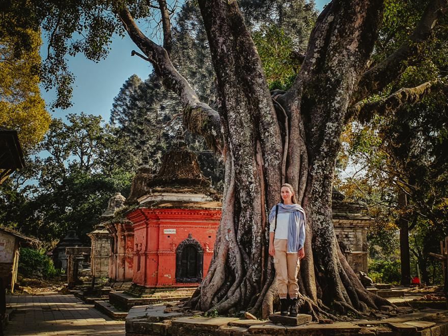 Copac foarte batran la Templul Pashupatinath